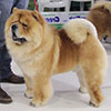 Chow-chow RENDEL DHENRY
